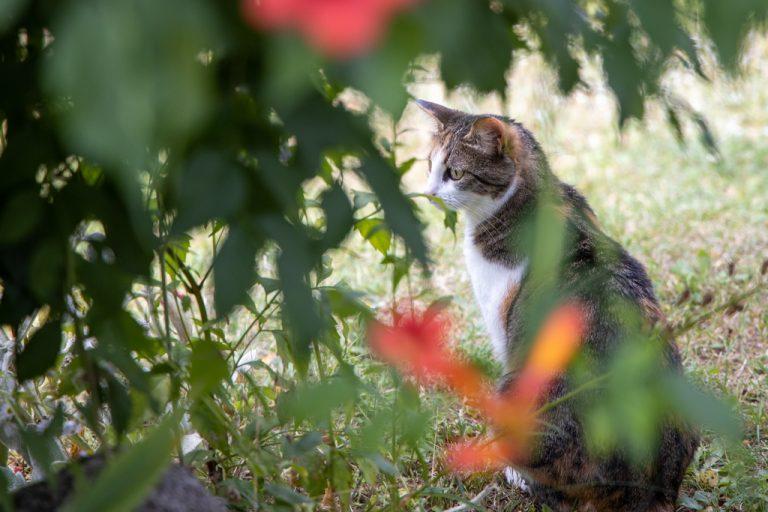 chat écailles de tortue dans les fleurs